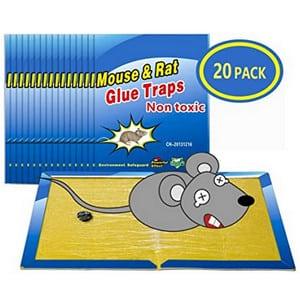 Test et avis sur le piège à rats collant Wemk